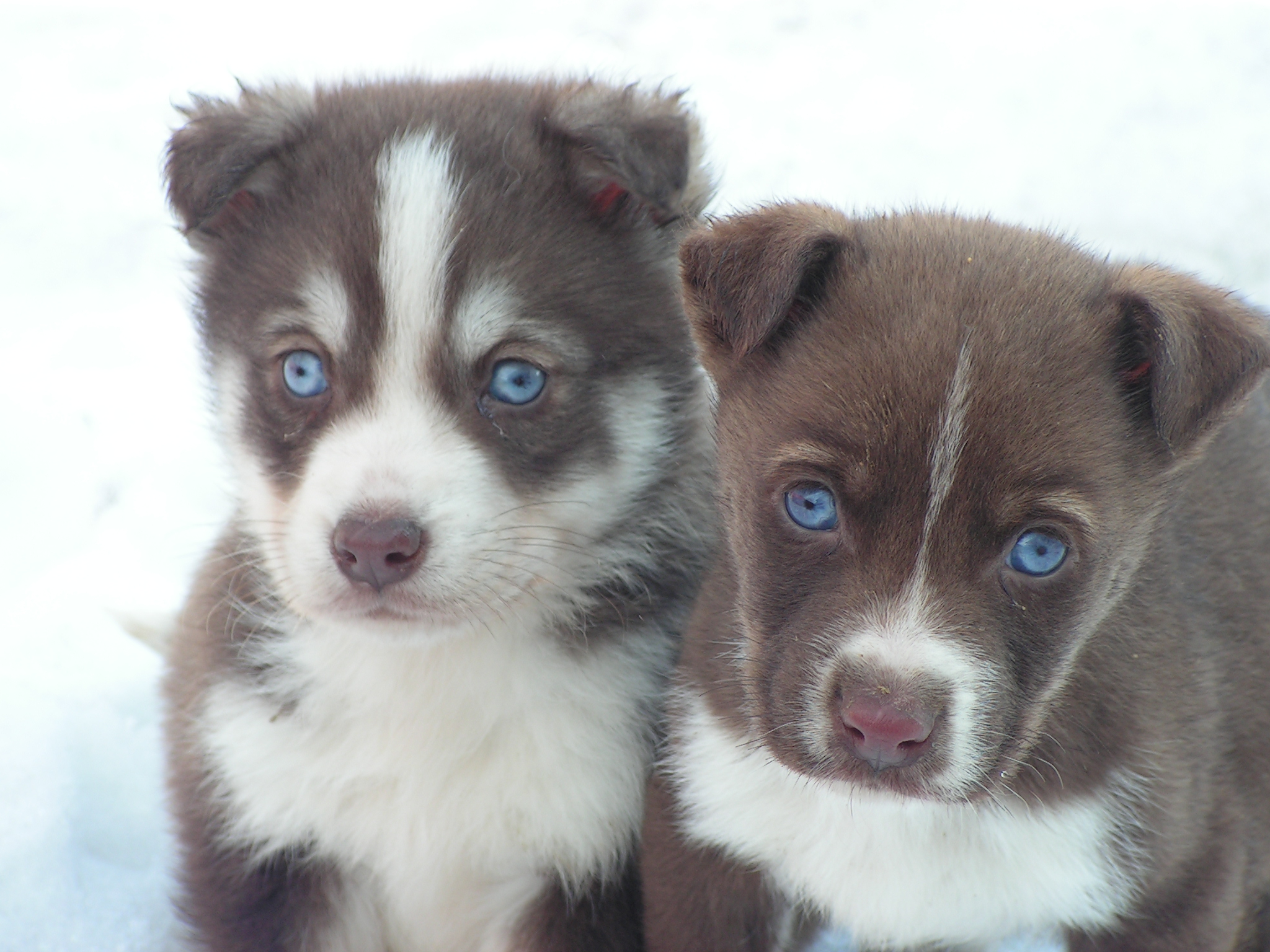Blu and Azzuro